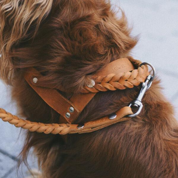 En brun hund bär en hundsele av läder med flätade detaljer
