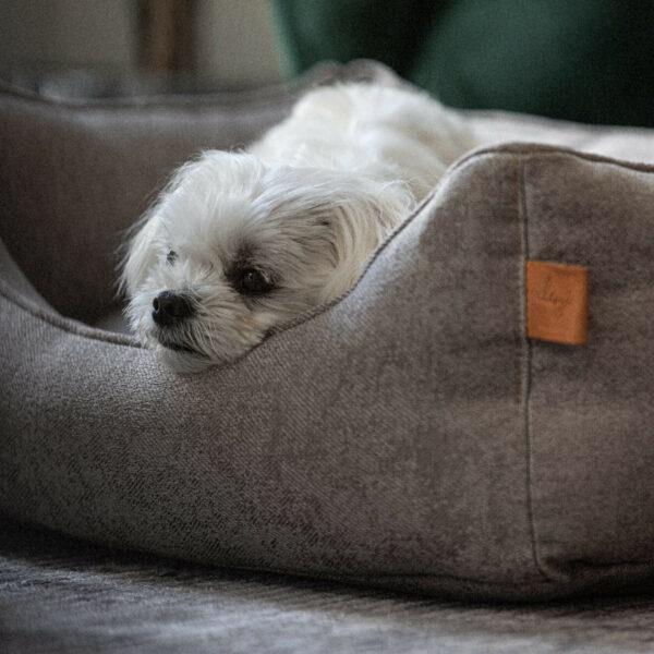 En vit hund av rasen malteser ligger i en beige hundbädd