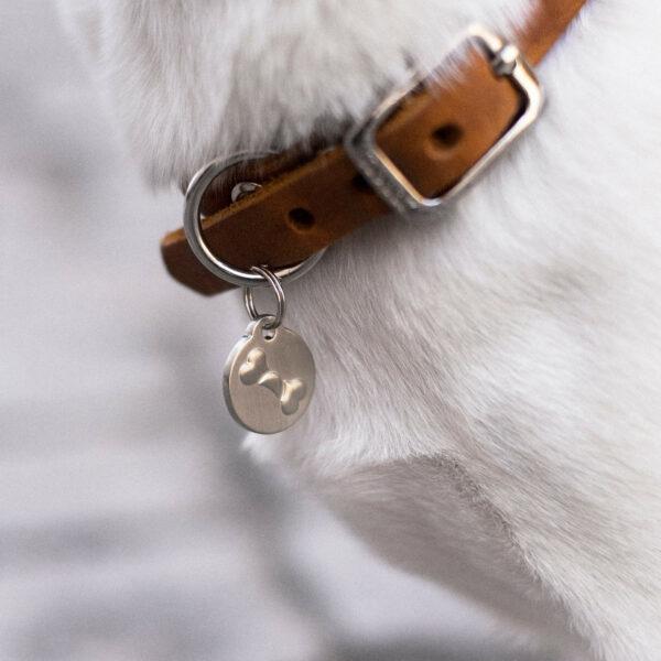 Runt halsen på en vit hund hänger ett brunt hundhalsband i läder. På halsbandet hänger en silvrig namnbricka.