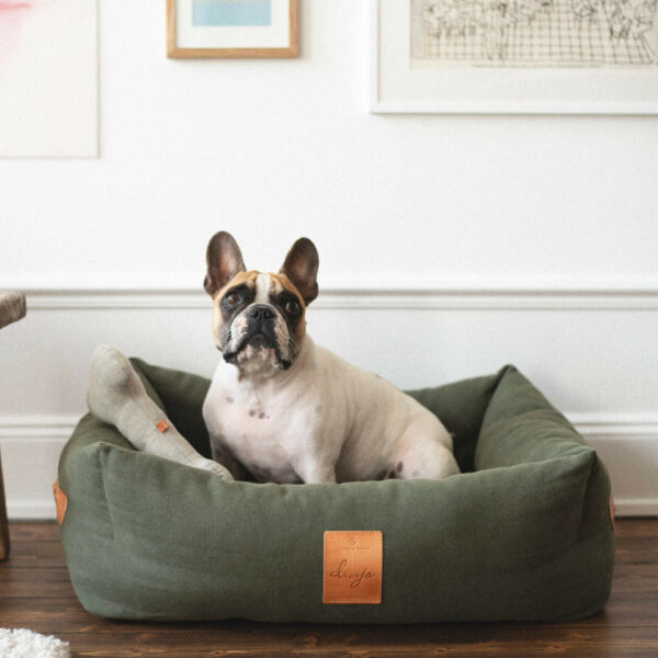 En fransk bulldog sitter i en grön hundbädd. Bredvid sig har hunden en grå hundleksak format som ett hundben