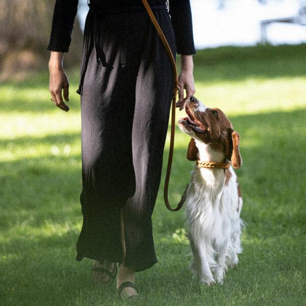 En hund går på promenad med sitt ägare. På sig har hunden ett flätat halsband av läder. Ägaren bär svart klänning och ett koppel som går diagonalt över kroppen.